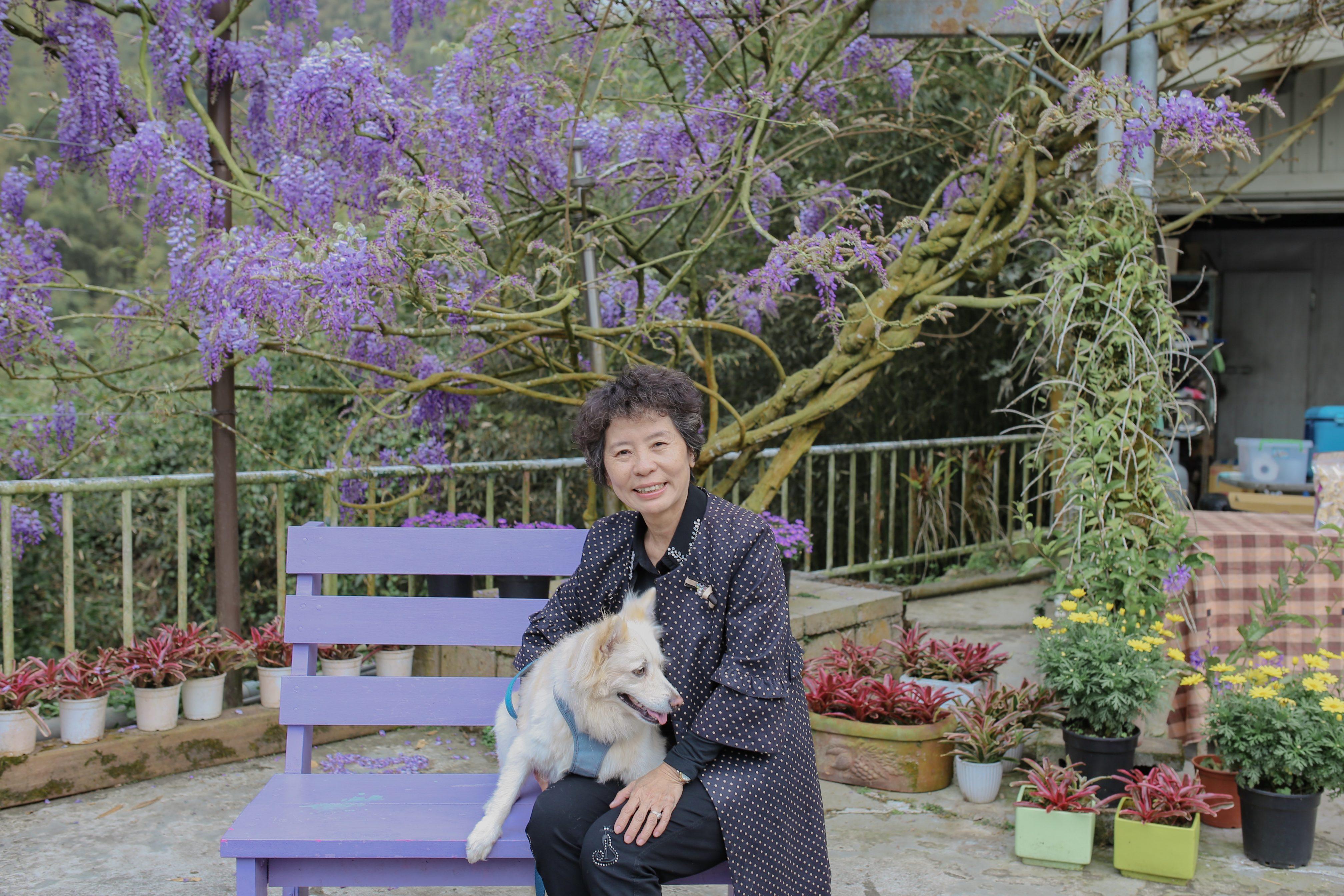 幼葉林餐廳紫藤花