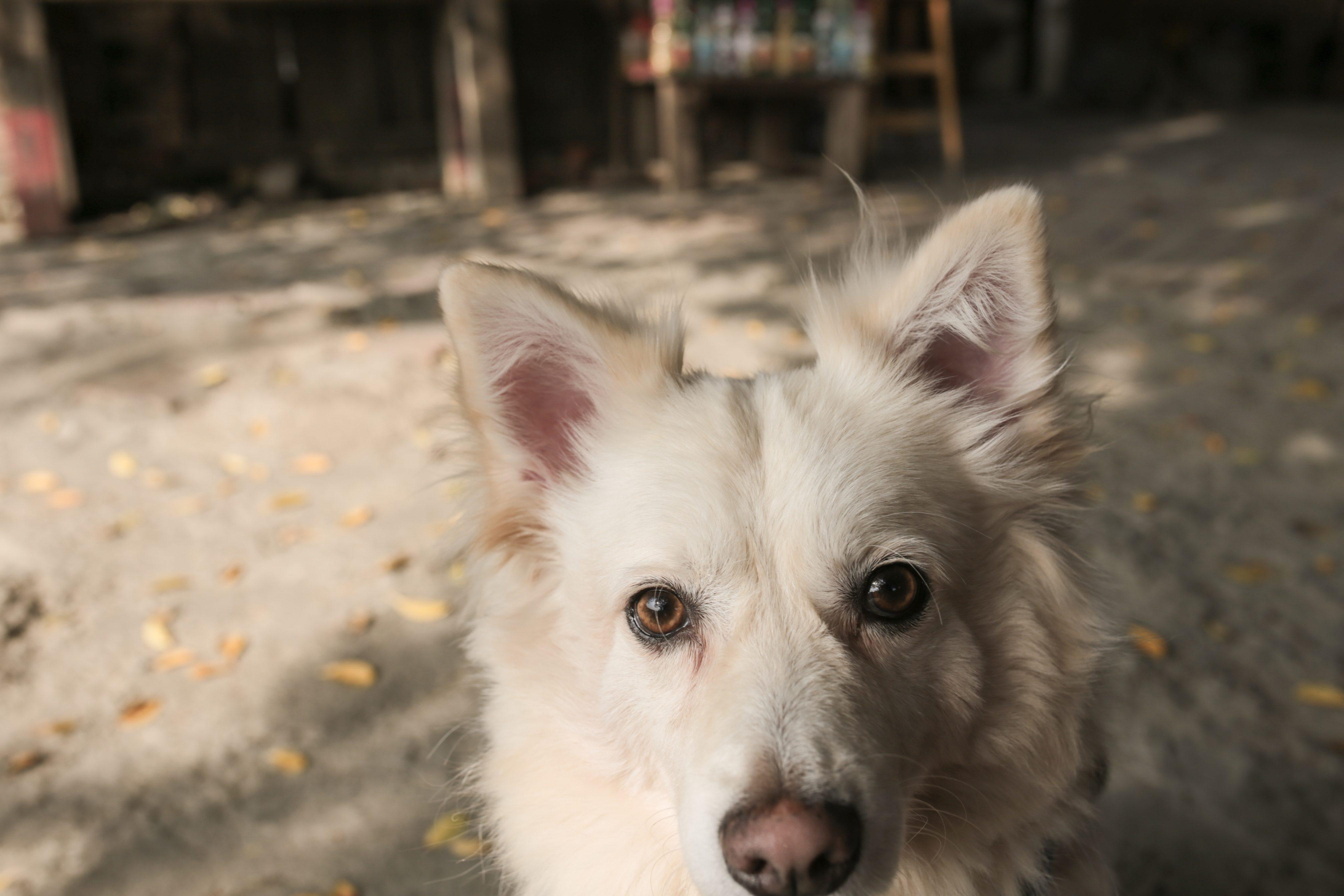 台南學甲老塘湖藝術村可以帶寵物