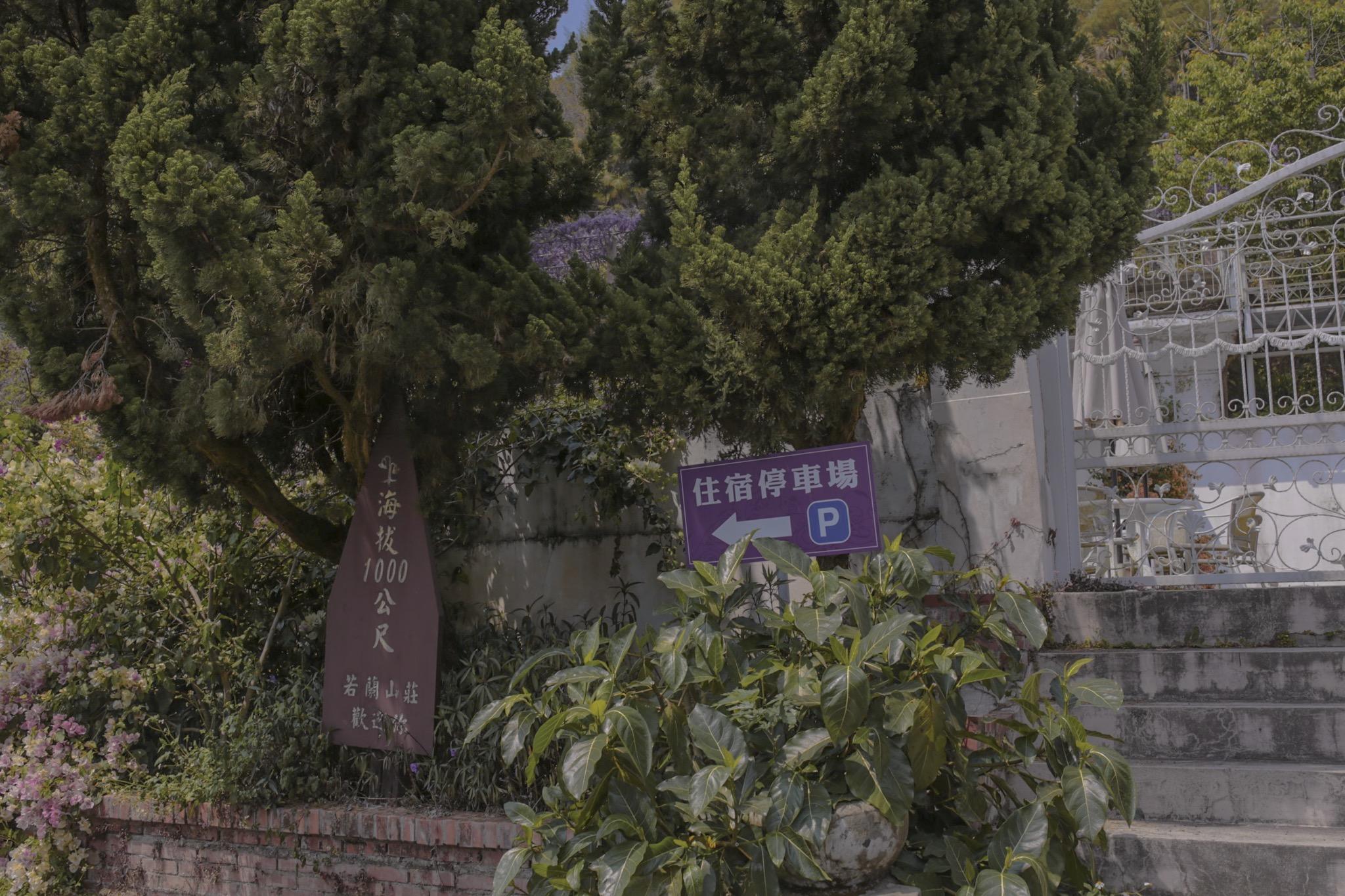 阿喜紫藤-嘉義瑞里景點-2021紫藤花季-嘉義景點-阿喜紫藤下午茶-阿喜紫藤交通