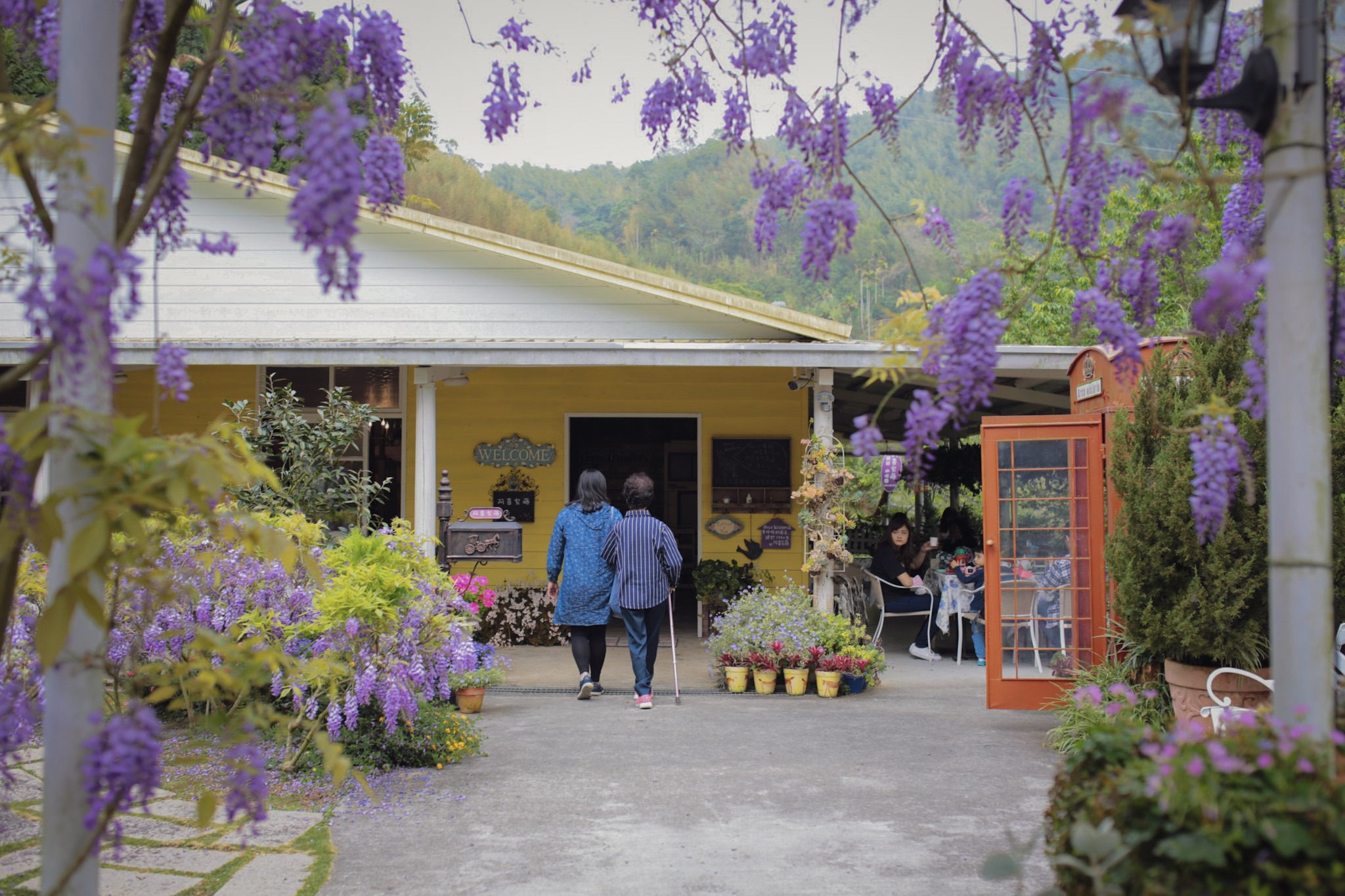 阿喜紫藤-嘉義瑞里景點-2021紫藤花季-嘉義景點-阿喜紫藤下午茶